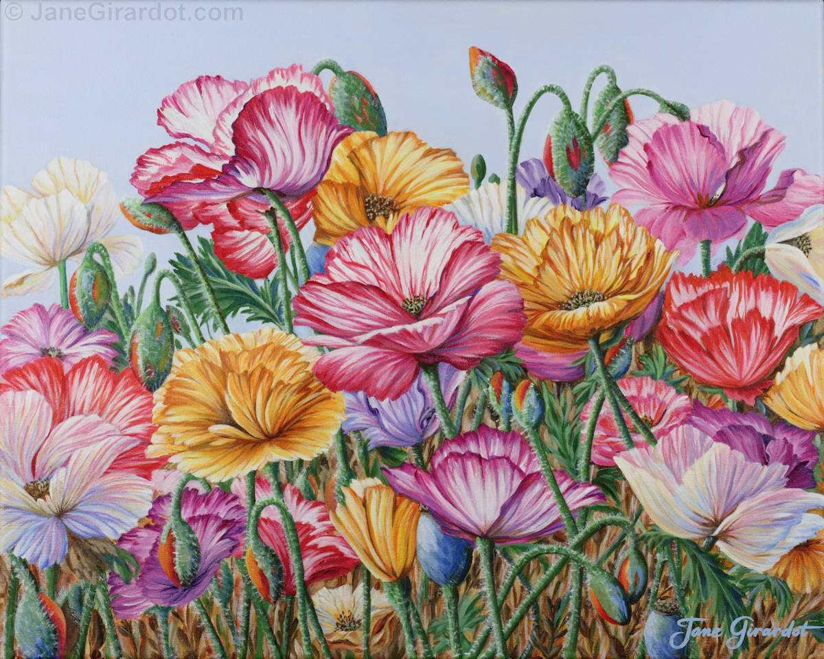 Coastal Poppies - Jane Girardot Art
