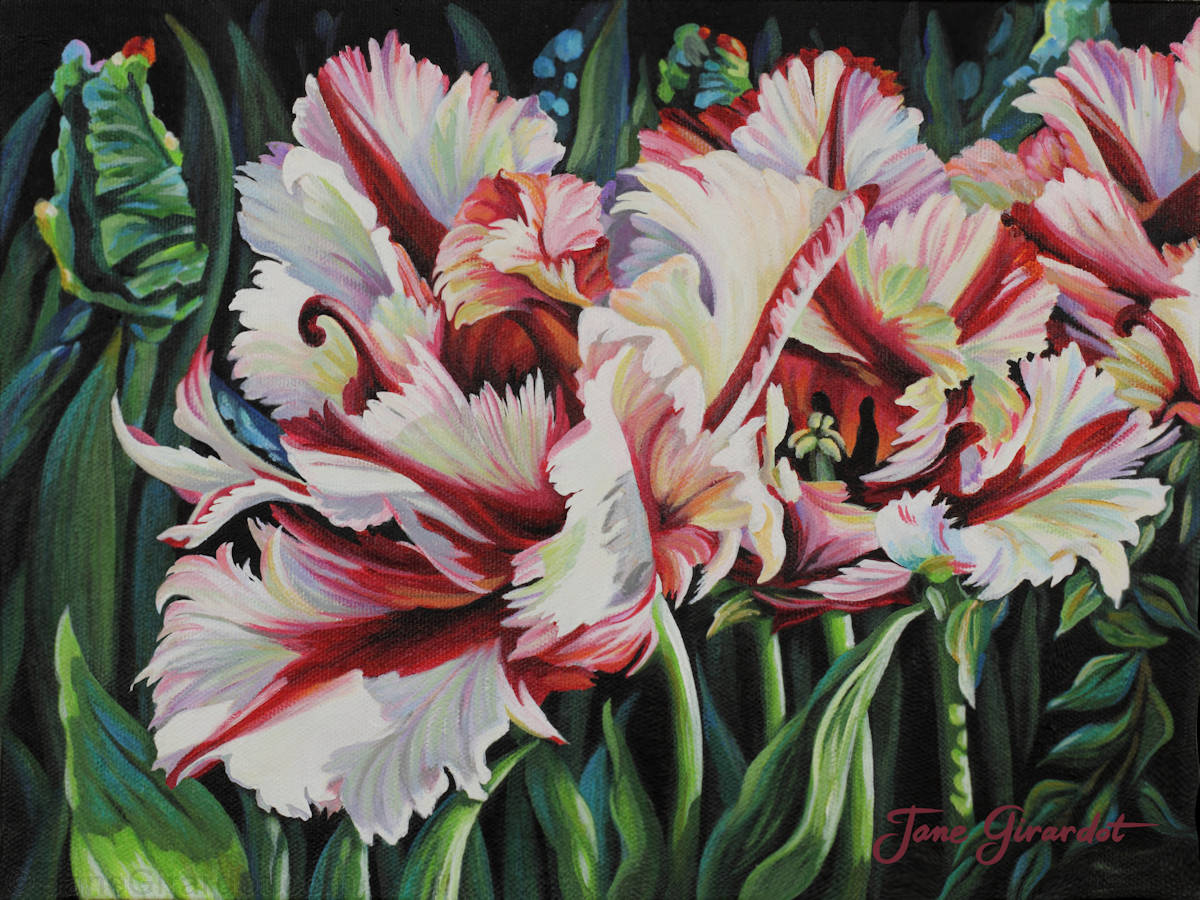 Fancy Parrot Tulips - Jane Girardot Art