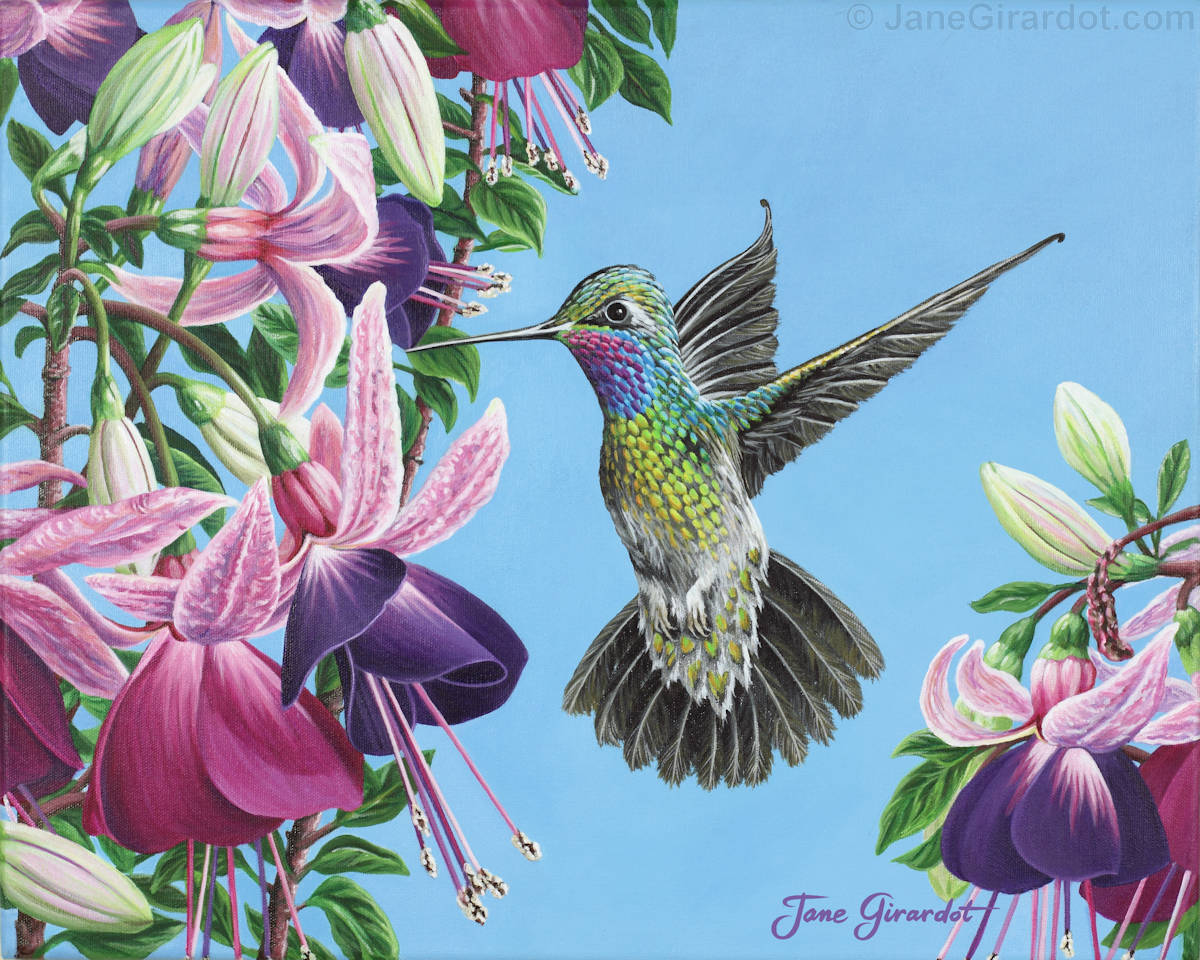 Hummingbird And Fuchsias - Jane Girardot Art