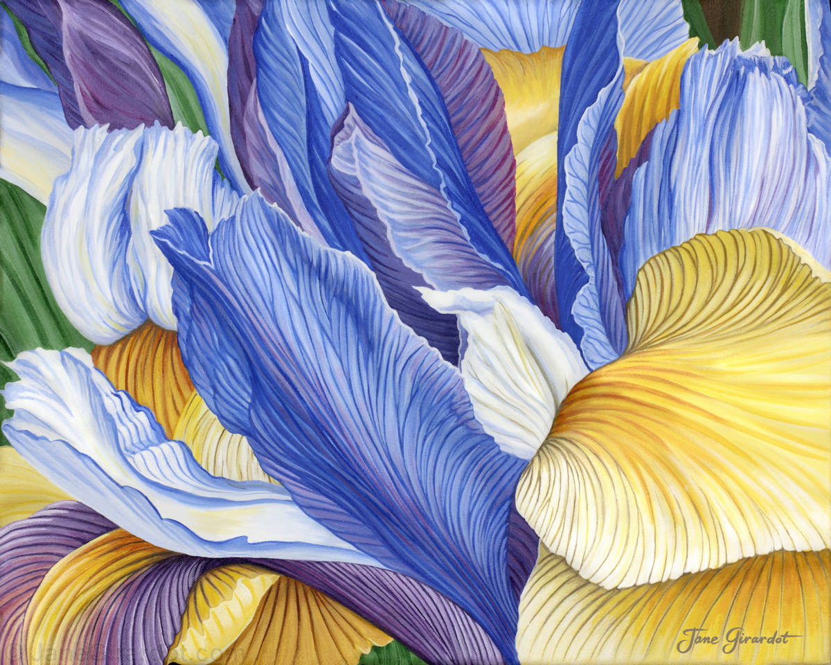 Iris - Jane Girardot Art