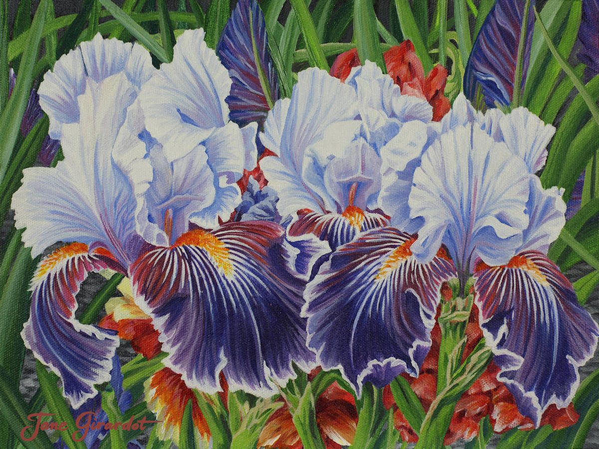 Iris Blooms - Jane Girardot Art