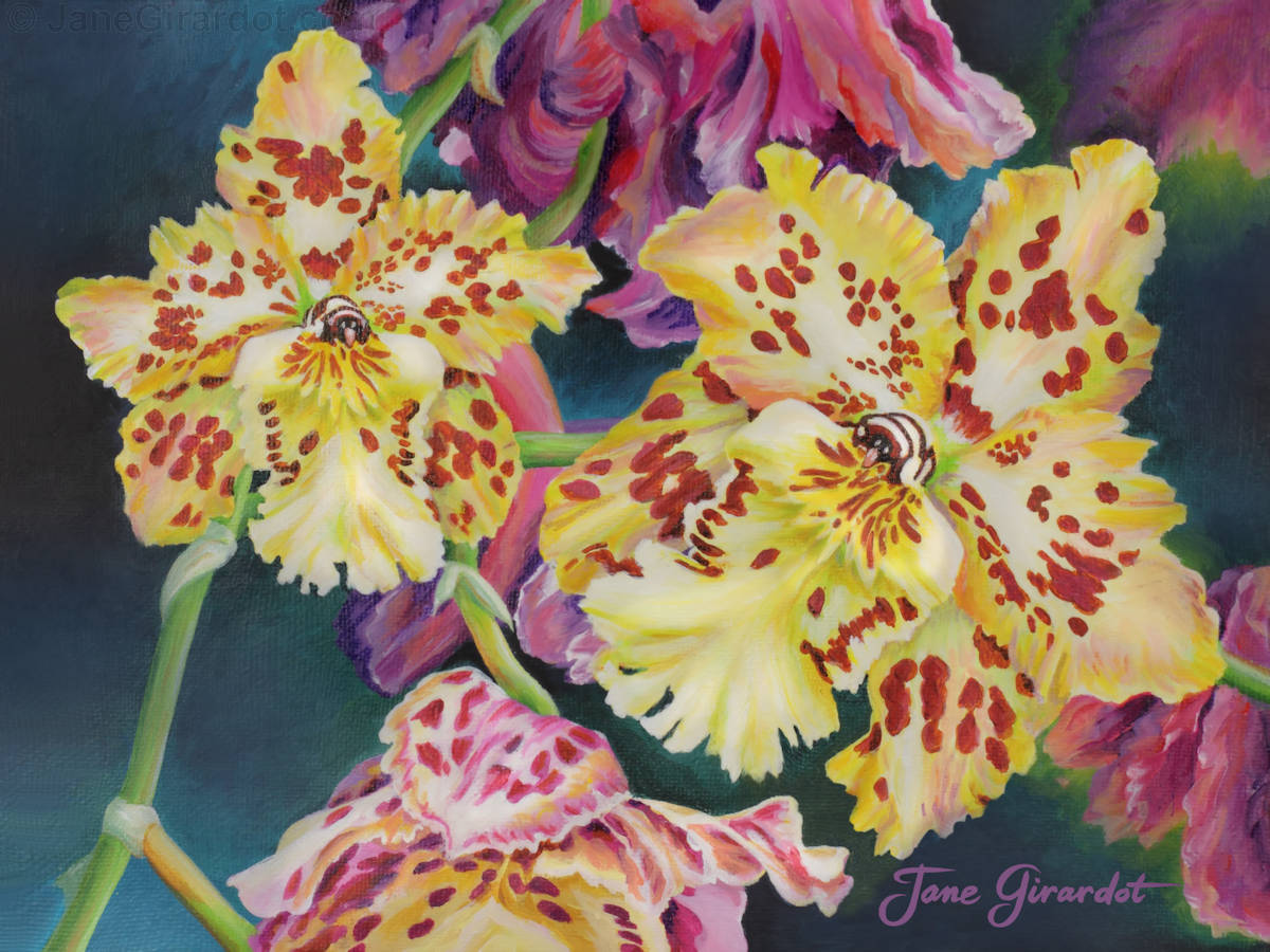 Tiger Orchid - Jane Girardot Art