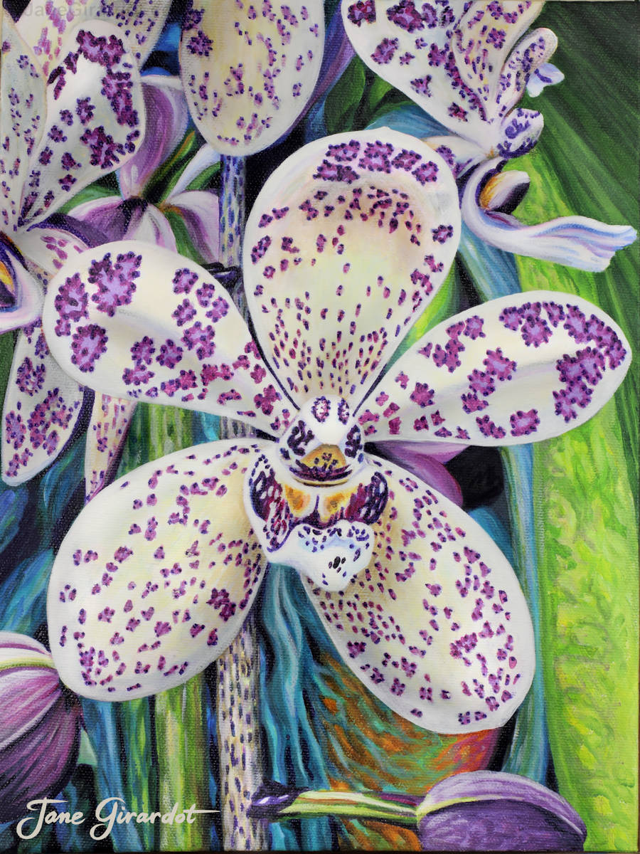 Violet Dotted Orchid - Jane Girardot Art