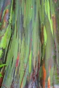 Colorful Tree.jpg