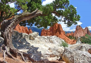 Twisted Tree Sedona02.jpg