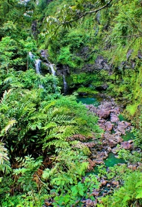 Waterfall Hana Maui02.jpg
