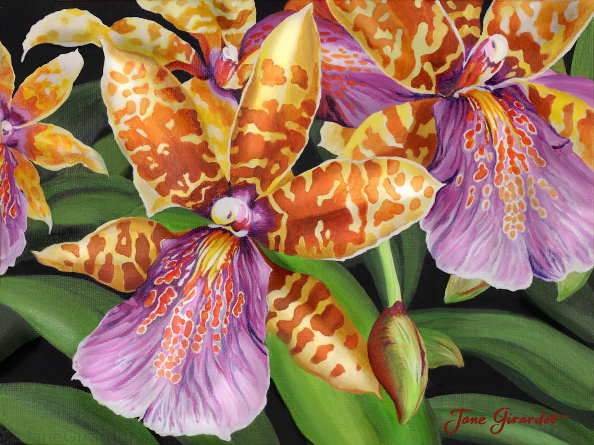 Paradise Orchid - Jane Girardot Art