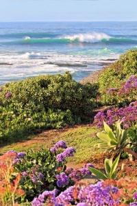 Coastline La Jolla01.jpg
