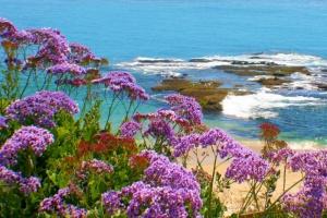 Purple Flower Coast Laguna01.jpg