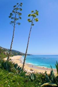 Tall Cactus Coast Laguna.jpg