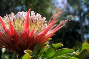 Foral Bloom.jpg