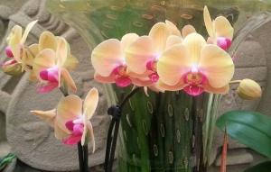 Orchid Cream & Red01.jpg