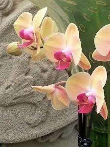 Orchid Cream & Red02.jpg