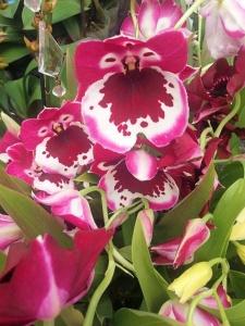 Orchid Purple02.jpg